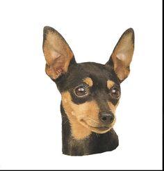 Miniature pinscher clipart clipart transparent download Chihuahua clipart mini pinscher, Chihuahua mini pinscher Transparent ... clipart transparent download