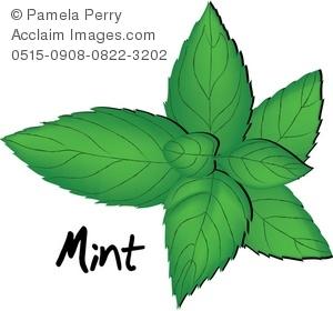Mint clipart banner transparent Mint clip art - ClipartFest banner transparent