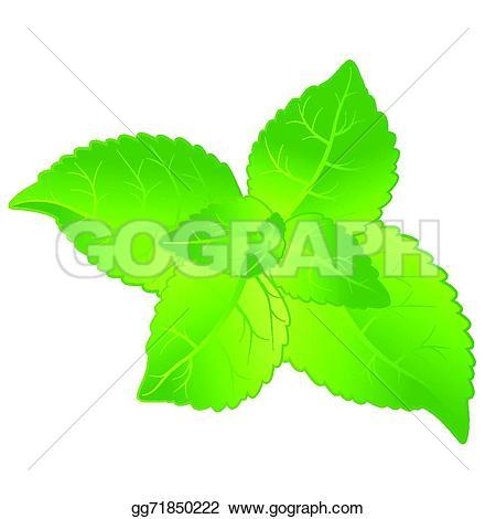 Mint grass clipart clipart Vector Art - Fresh mint leaves. EPS clipart gg71850222 - GoGraph clipart