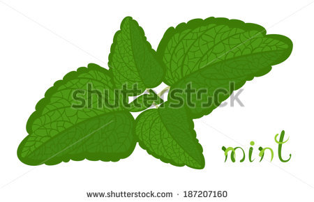 Mint grass clipart banner free library Green Mint. Illustration Of Twig With Fresh Mint Leaves. Cartoon ... banner free library