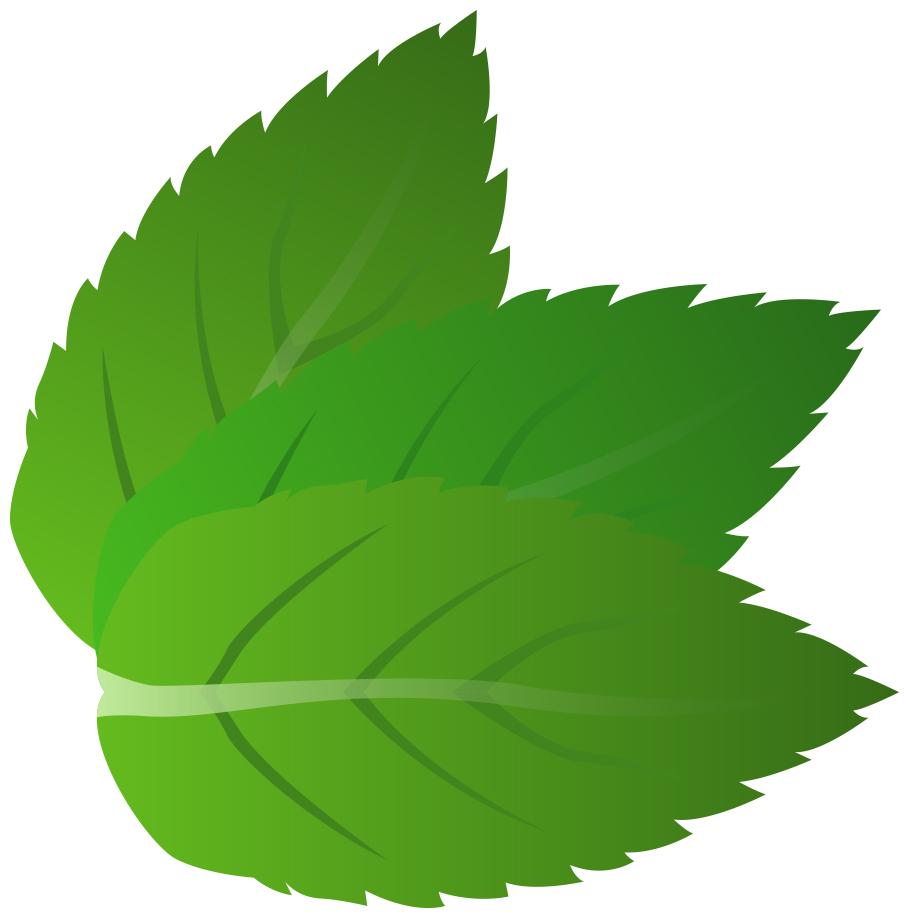Mint grass clipart image transparent download Clipart mint leaves - ClipartFest image transparent download