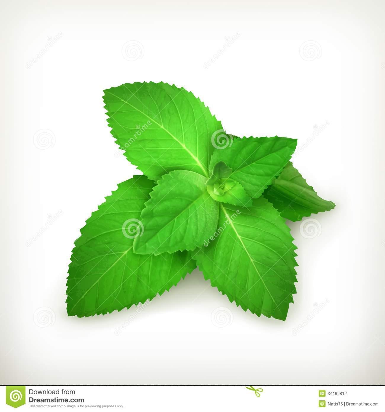 Mint leaf clip art image black and white stock Image Gallery of Mint Leaf Clip Art image black and white stock