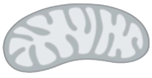 Mitochondria clipart black and white svg transparent stock Bean | Free Images at Clker.com - vector clip art online ... svg transparent stock