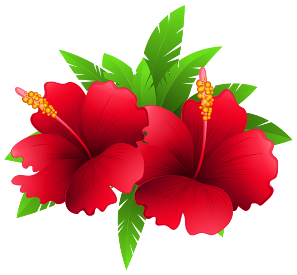 Moana flower clipart black and white download Exotic Flowers and Plant PNG Clipart Image | flores | Pinterest ... black and white download
