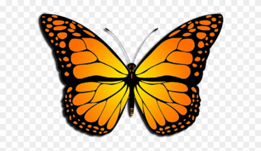 Monarch butterfly clipart clip art royalty free download Monarch Butterfly Clipart August - Monarch Butterfly Clipart ... clip art royalty free download