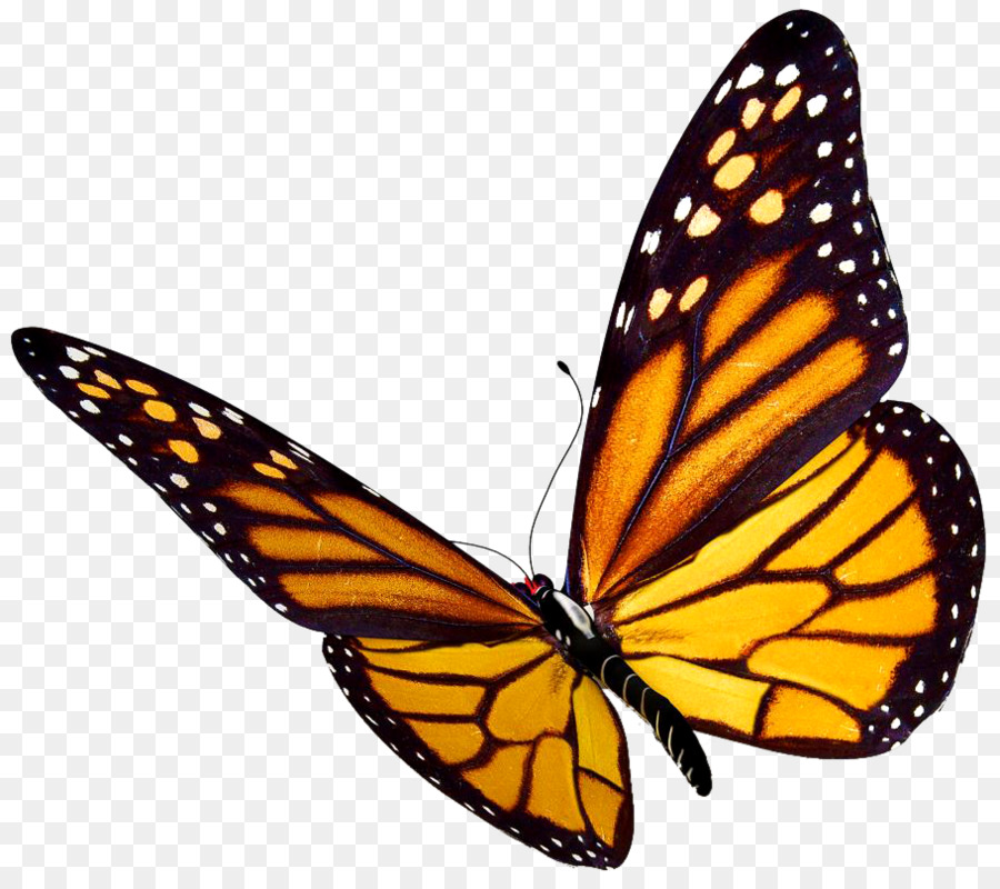 Monarch butterfly clipart image free Monarch Butterfly clipart - Butterfly, Wing, transparent ... image free