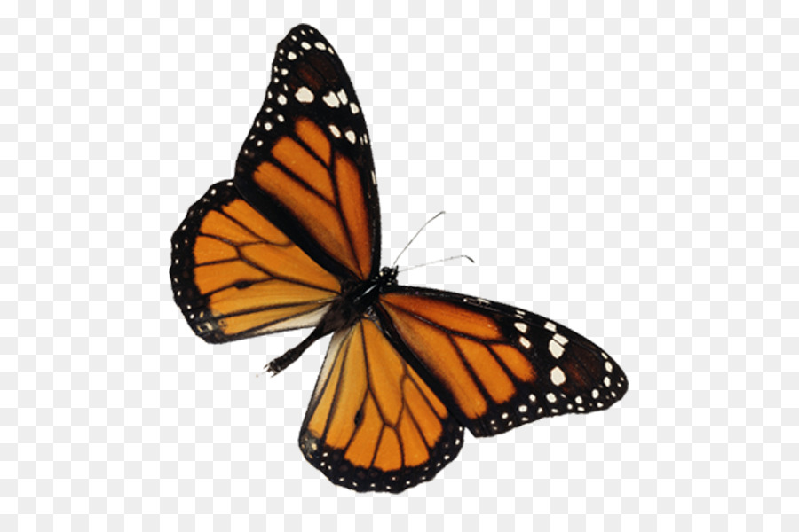 Monarch butterfly clipart graphic library library Butterfly Clipart png download - 600*600 - Free Transparent ... graphic library library