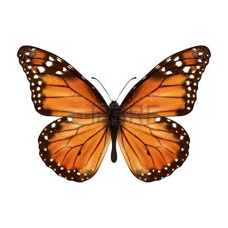 Monarch butterfly clipart free picture royalty free download 3,642 Monarch Butterfly Stock Vector Illustration And Royalty Free ... picture royalty free download