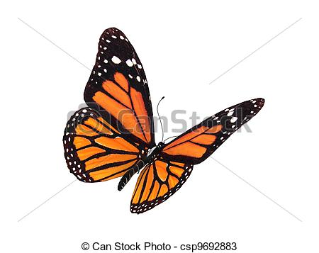 Monarch butterfly clipart free png royalty free Monarch butterfly Stock Illustration Images. 3,119 Monarch ... png royalty free