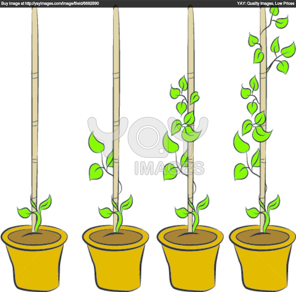 Money plant images clipart image free download Money plant images clipart - ClipartFest image free download