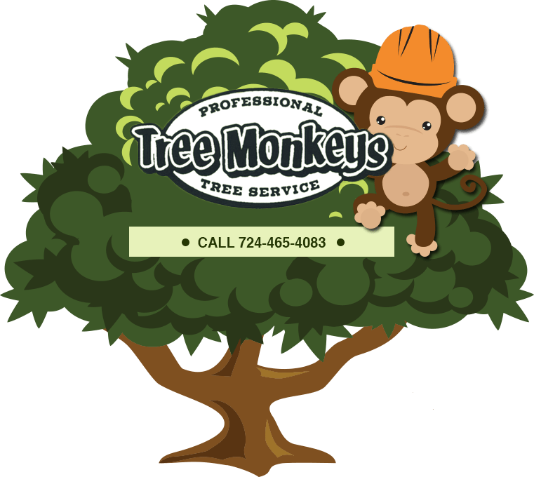 Tree pruning clipart clip free stock Tree removal, tree trimming, stump grinding | Indiana, PA | Tree ... clip free stock