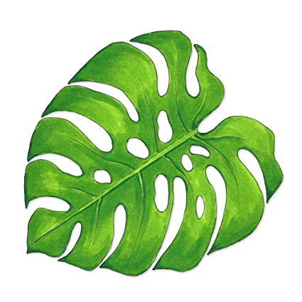 Monstera leaf clipart svg freeuse stock Amazon.com: Overly Attached Decals Watercolor Monstera Swiss Cheese ... svg freeuse stock