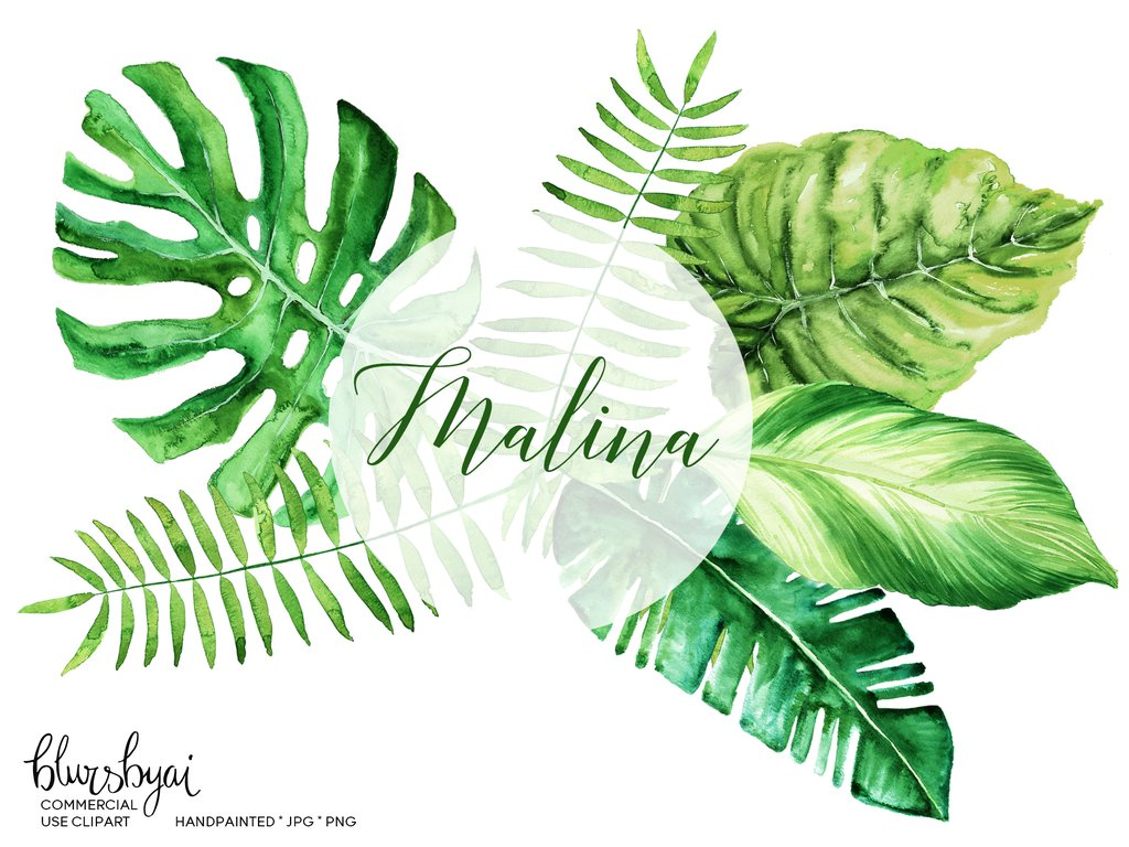 Monstera leaf clipart svg black and white stock Watercolor tropical leaves clipart, monstera deliciosa, banana leaf & palm,  commercial license svg black and white stock