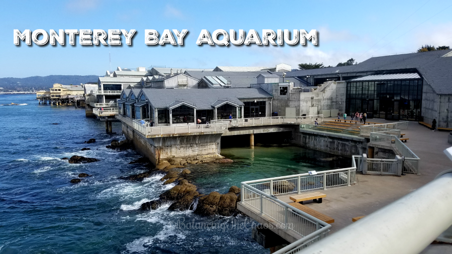 Monterey bay aquarium clipart banner freeuse Discovering The Wonders of The Ocean with Monterey Bay Aquarium banner freeuse
