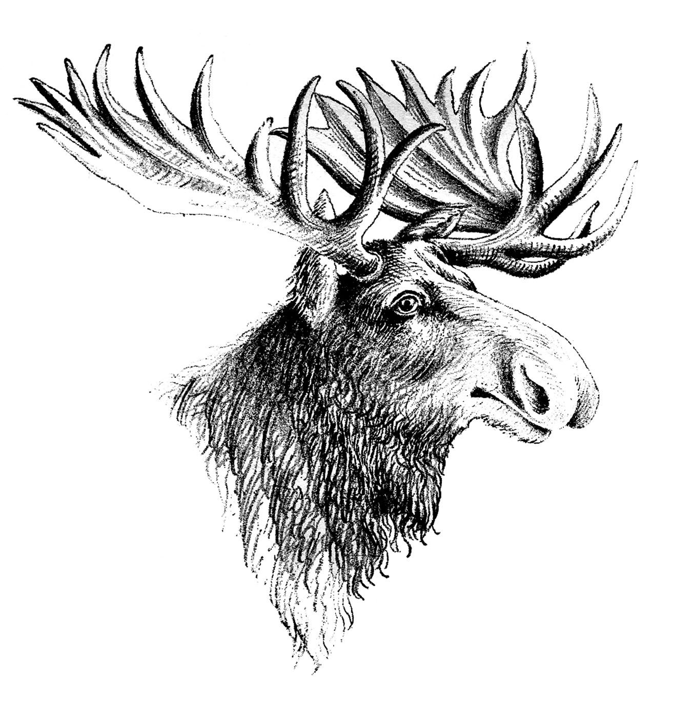 Moose fighting clipart black and white stock Vintage Clip Art - Moose | crafts | Clip art, Graphics fairy, Moose ... black and white stock