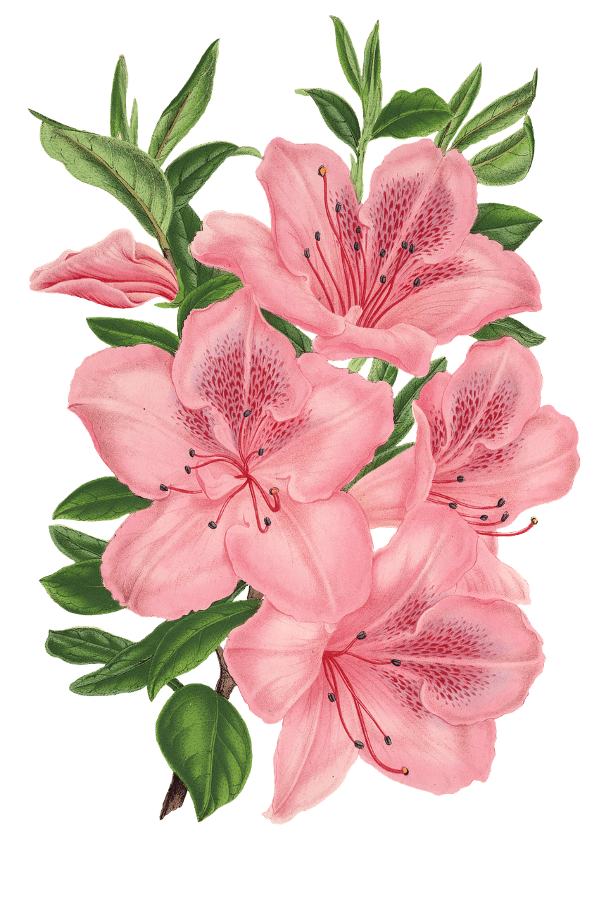 Picture offlowers picture royalty free stock Bunch Of Flowers Drawing at GetDrawings.com | Free for personal use ... picture royalty free stock