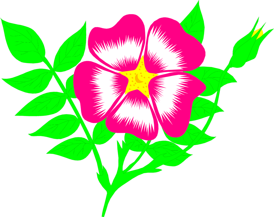 Morning glory flower clipart jpg library stock Flower Pink | Free Stock Photo | Illustration of a pink flower | # 8661 jpg library stock
