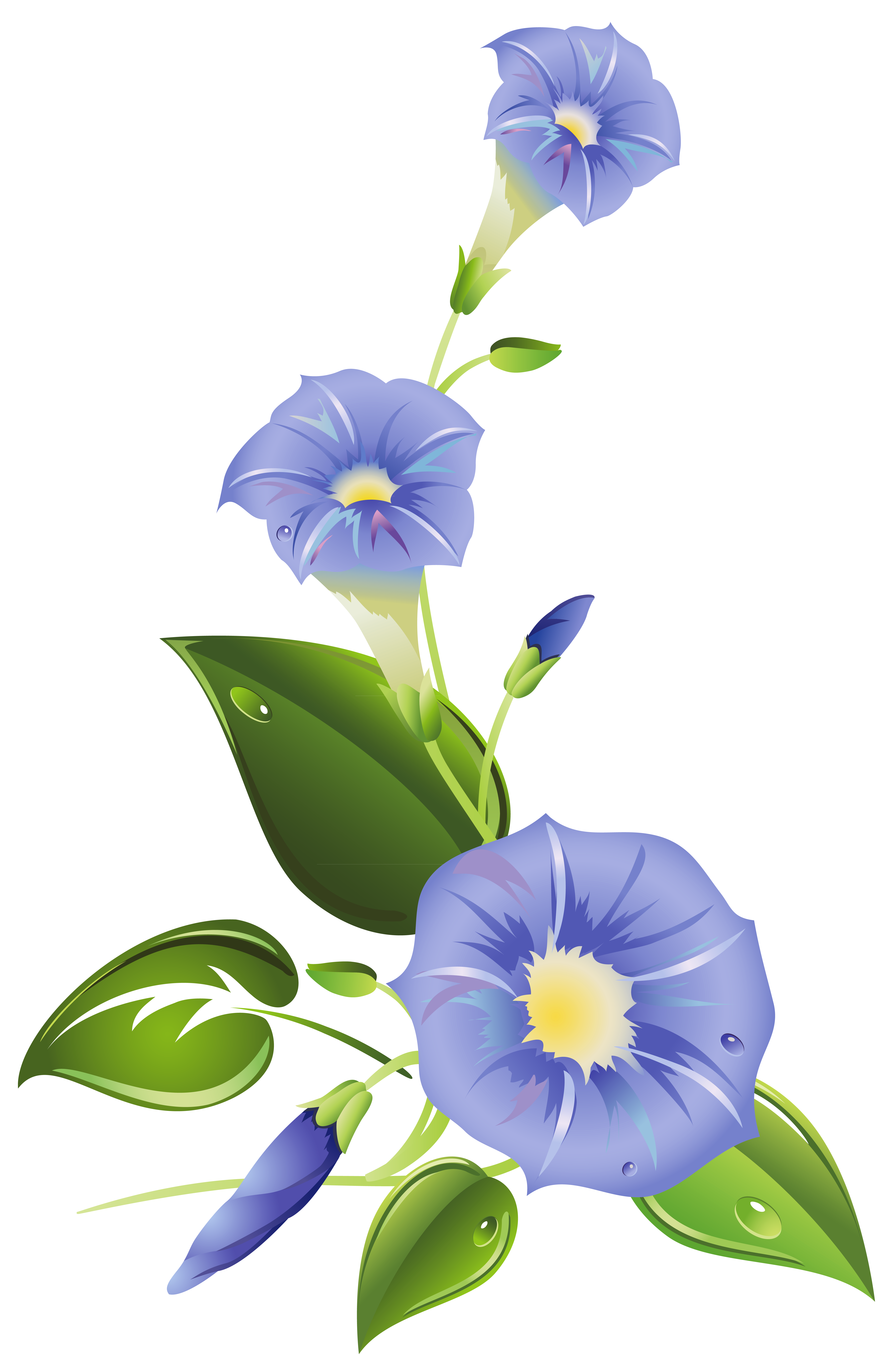 Morning glory flower clipart png freeuse download Ipomoea purpurea Morning glory Ipomoea indica Ipomoea carnea Clip ... png freeuse download
