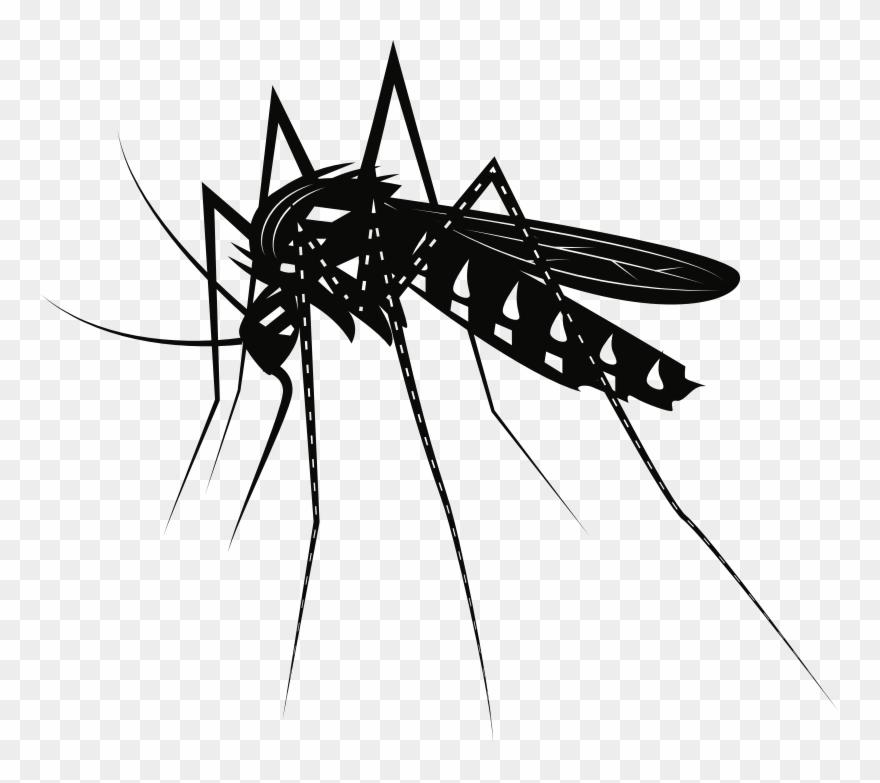 Mosquito clipart jpg library Medium Image - Mosquito Clipart Black And White - Png ... jpg library