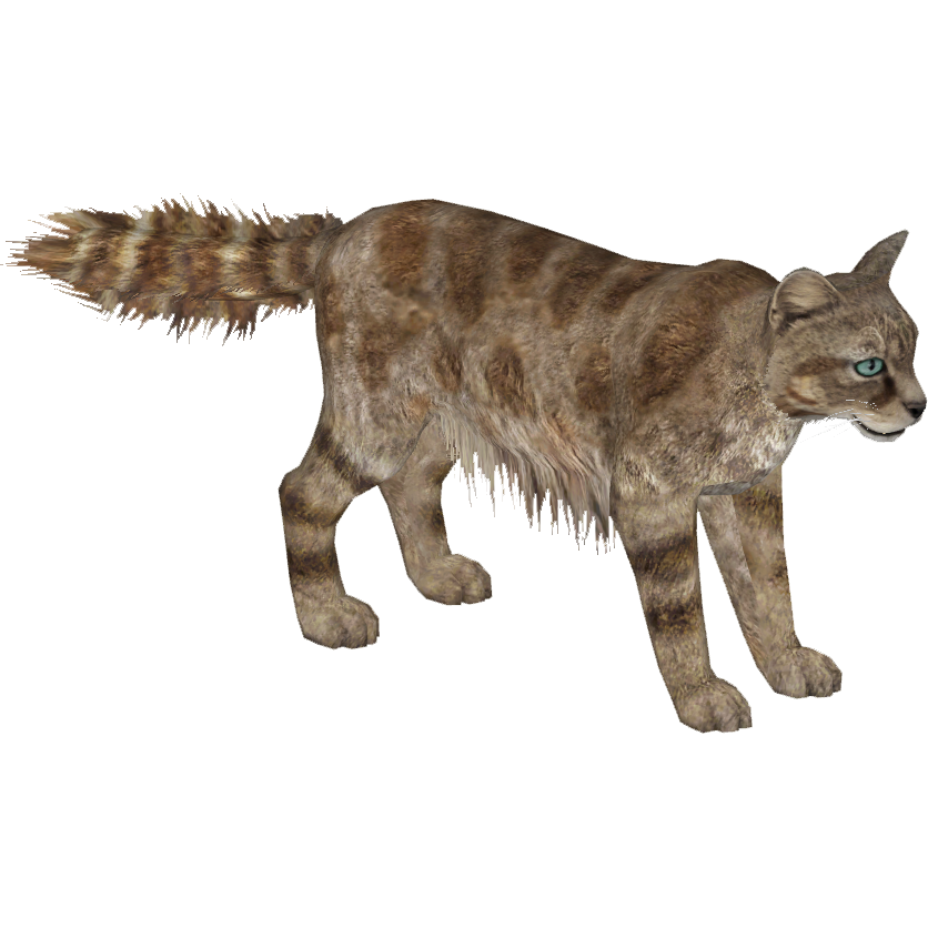 Mountain cat clipart royalty free library Andean Mountain Cat (Tamara Henson) | ZT2 Download Library Wiki ... royalty free library