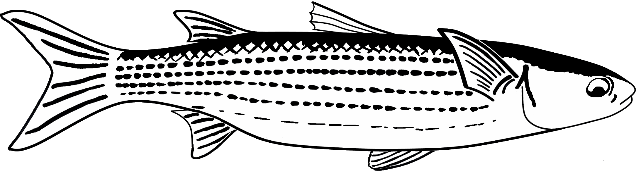 Mullet fish clipart image black and white 28+ Collection of Mullet Drawing   High quality, free cliparts ... image black and white