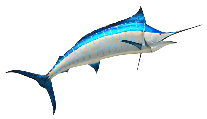 Mullet fish clipart clip transparent library fish png - Free PNG Images   TOPpng clip transparent library
