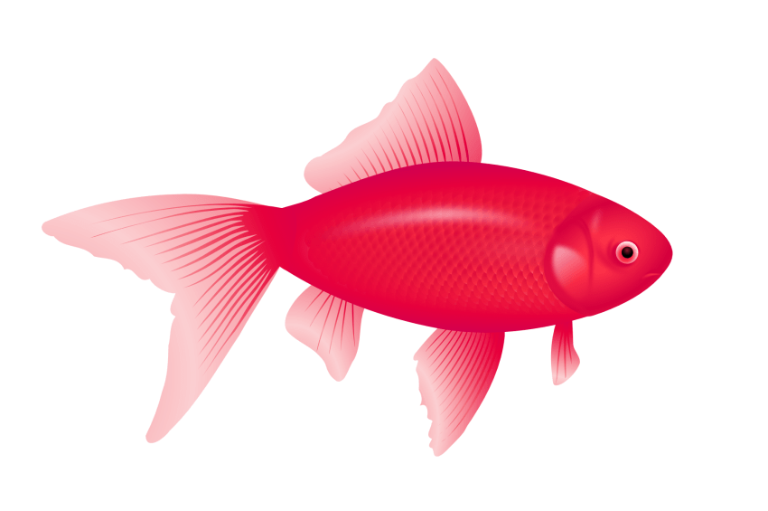 Mullet fish clipart graphic freeuse stock fish png - Free PNG Images   TOPpng graphic freeuse stock