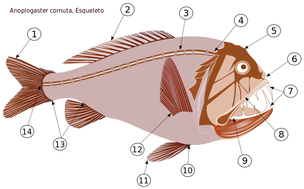 Mullet fish clipart free download New Fish Clipart Transparent – Best Digital Clipart For You free download