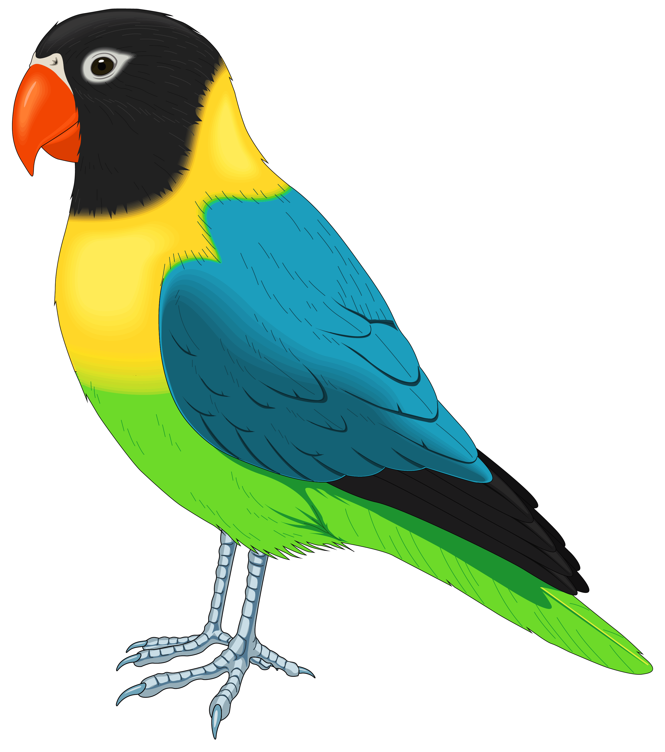 Multi colored clipart clipart freeuse Multicolored Bird PNG Clipart - Best WEB Clipart clipart freeuse