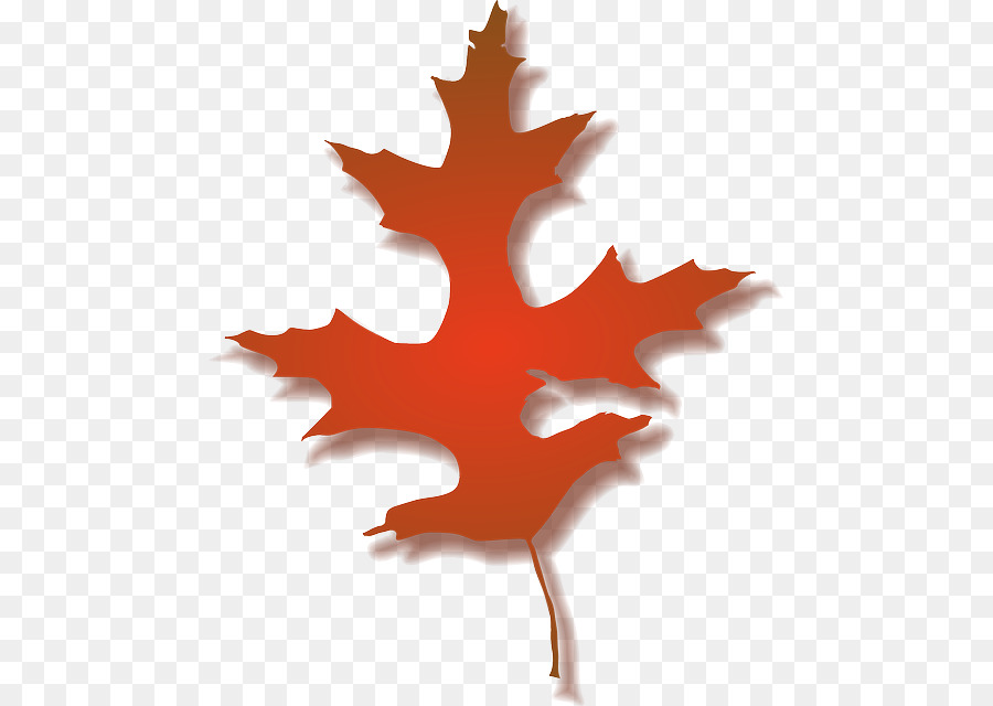 Multicolored maple leaf clipart svg free download Oak Tree Drawing png download - 521*640 - Free Transparent Autumn ... svg free download