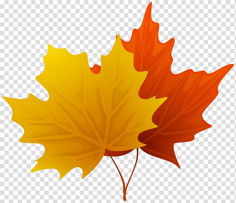 Multicolored maple leaf clipart svg free Two yellow and red maple leaves, Leaf , Fall Maple Leaves Decorative ... svg free