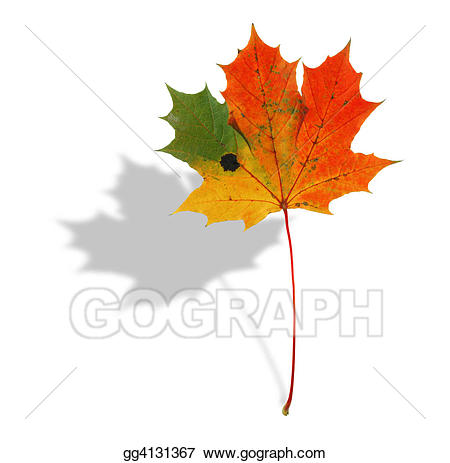 Multicolored maple leaf clipart svg free library Clip Art - Multicolored maple leaf with shadow. Stock Illustration ... svg free library