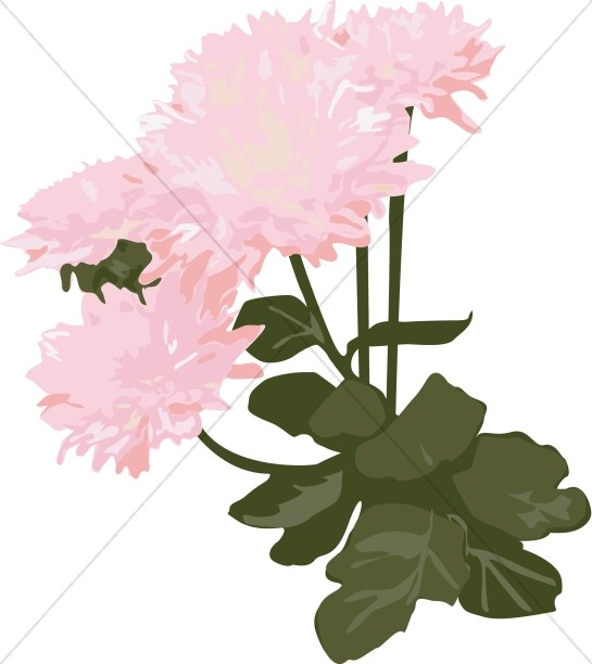 Mums clipart graphic library library Pink Mums in the Garden | Church Bouquet Clipart graphic library library