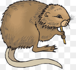 Muskrat PNG - muskrat-vector muskrat-drawing muskrat-animal muskrat ... svg black and white library
