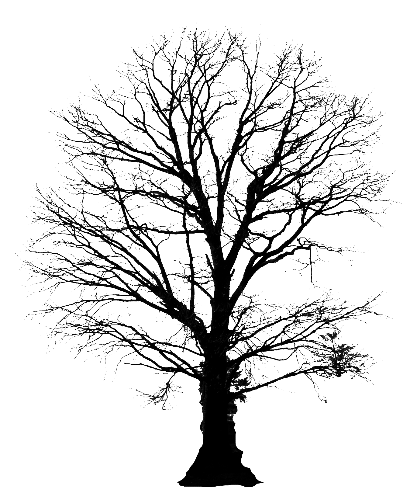 Tall tree silhouette clipart clip royalty free library tree silhouette - Google Search | So ya wanna paint a picture ... clip royalty free library