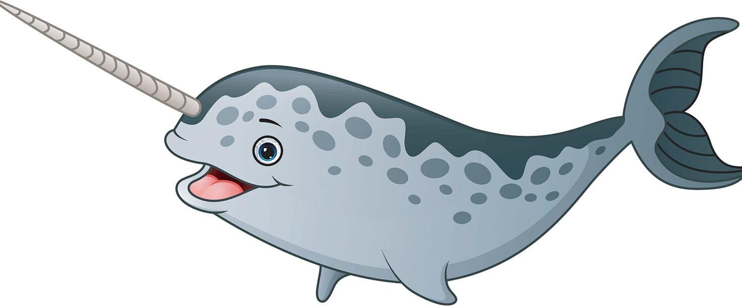 Narwhal without a horn clipart graphic library 1-3 What is a Narwhal?   Smrt English graphic library
