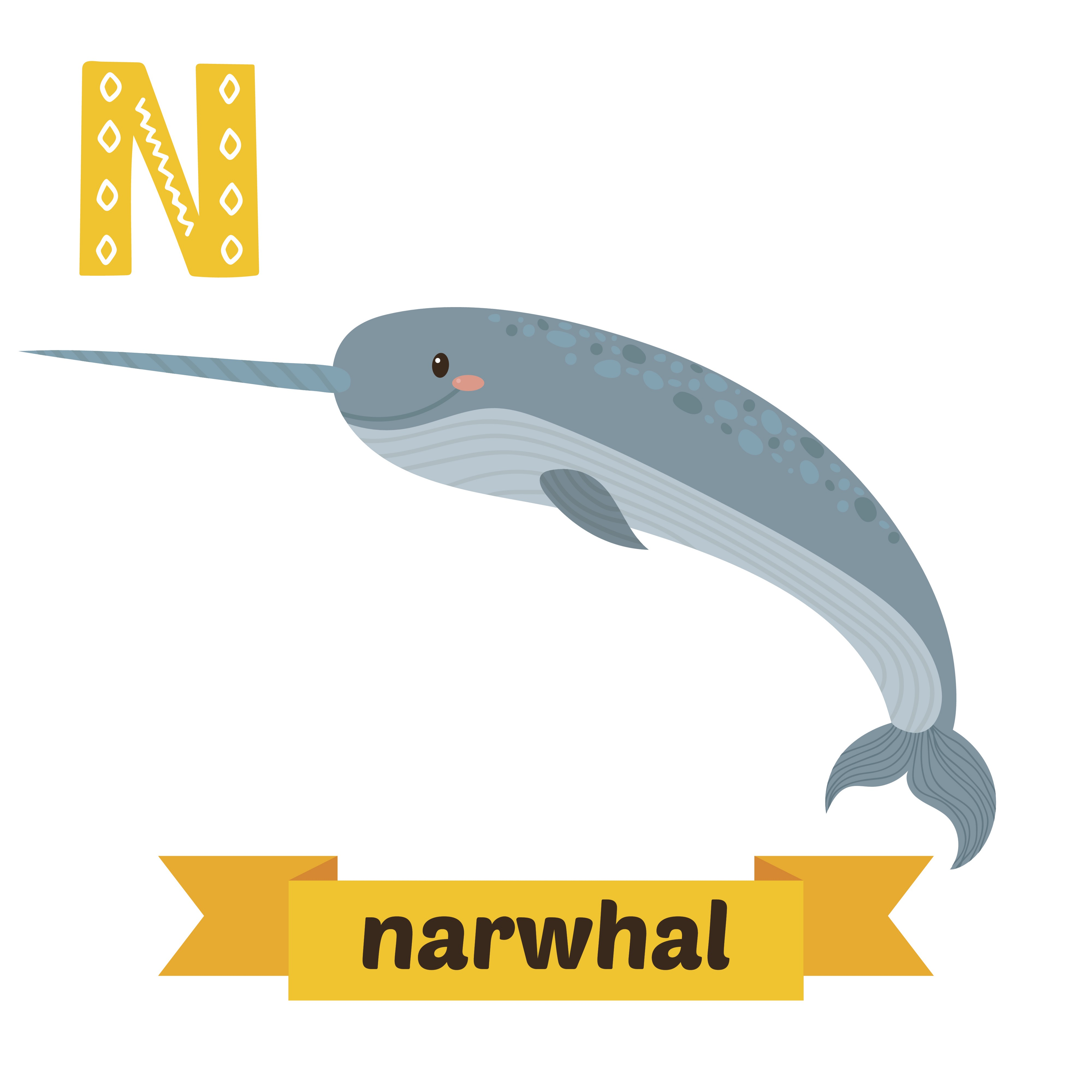 Narwhal without a horn clipart clip art free Everything You Never Knew About Narwhals - OMGFacts - Medium clip art free