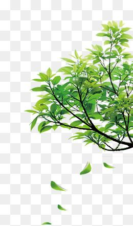 Nature clipart for photoshop image black and white library A Natureza, A Natureza, Flores, Gramado PNG Imagem para ... image black and white library