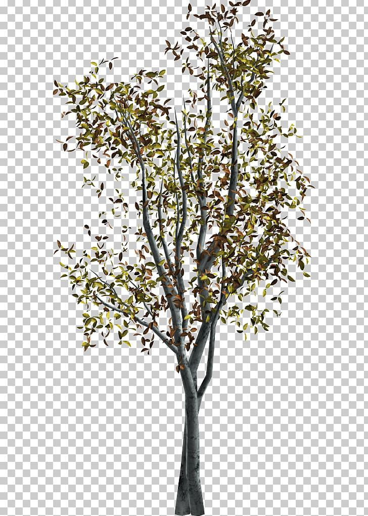 Nature clipart for photoshop clip royalty free library Twig Portable Network Graphics Adobe Photoshop Tree PNG ... clip royalty free library