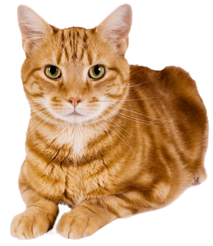 Neuter cat clipart clip royalty free library The Cost - Spay and Neuter Kansas clip royalty free library