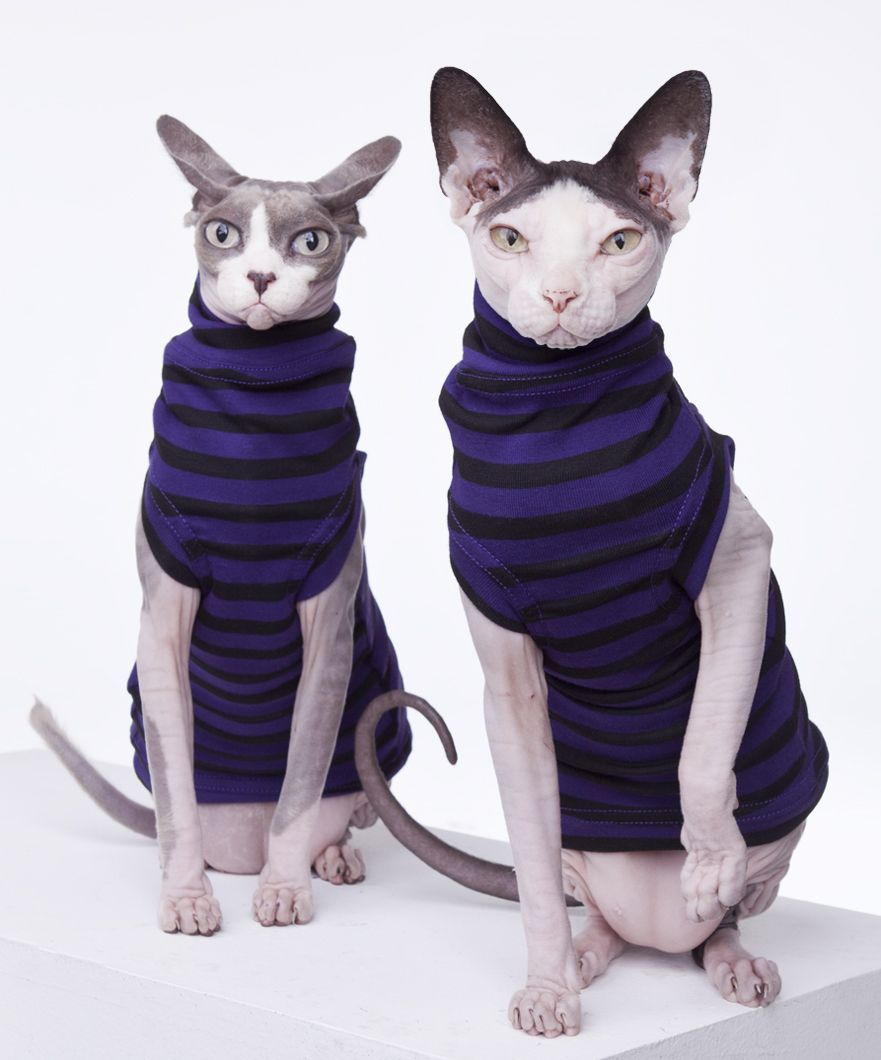 New hairless cat at home funny clipart vector freeuse download Sphynx Cat Wear, the Original sphynx clothing company ... vector freeuse download