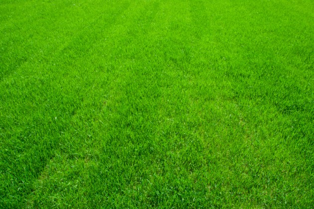 Nice green and beautiful lawn clipart clipart royalty free stock Free Beautiful Lawn Cliparts, Download Free Clip Art, Free Clip Art ... clipart royalty free stock
