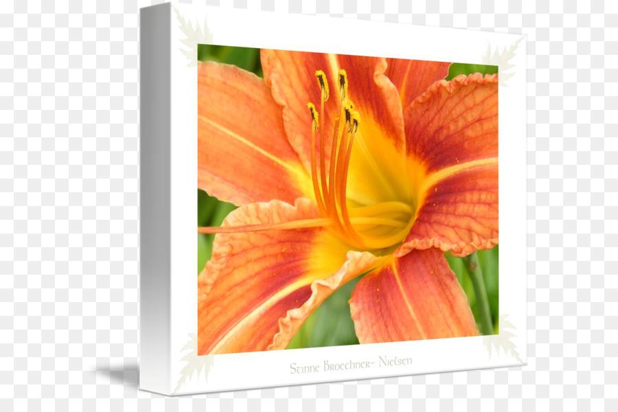Nielsen clipart graphic transparent Flowers Clipart Background png download - 650*584 - Free Transparent ... graphic transparent