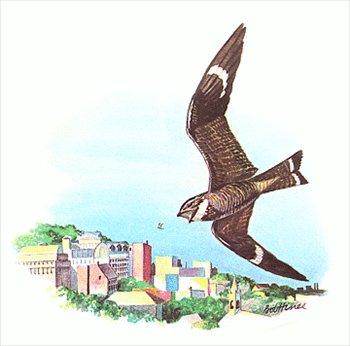 Nighthawks clipart