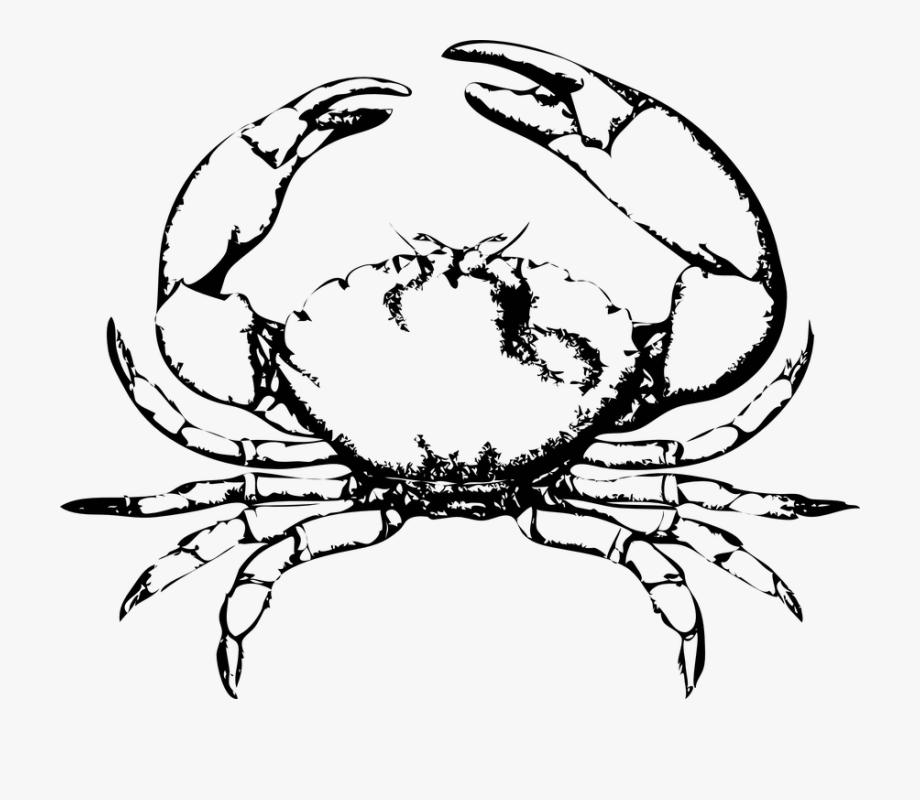 No copyright crab clipart black and white image transparent Crab Claw Png - Black And White Crab #1006834 - Free ... image transparent