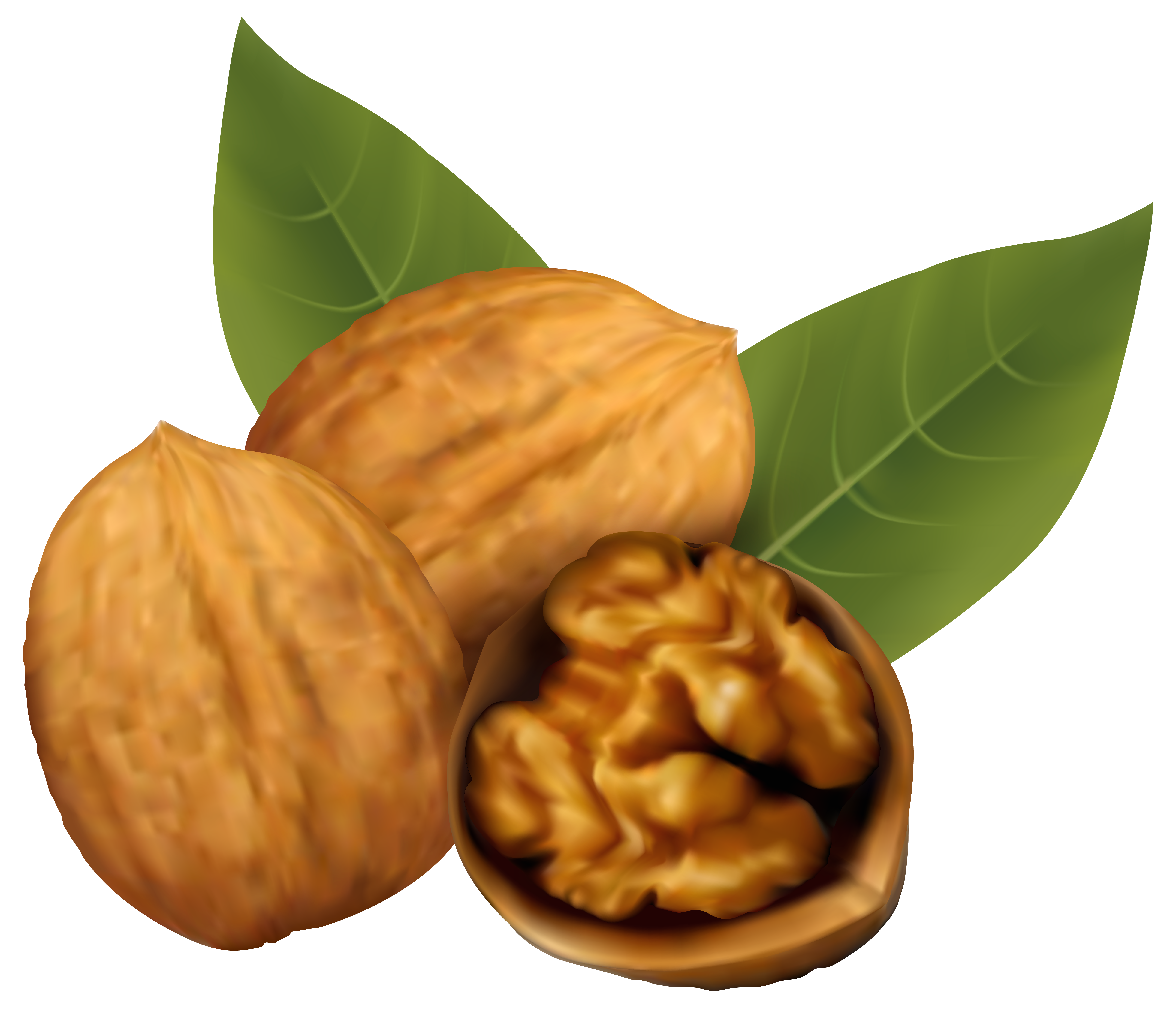 Nut tree clipart clip free library Walnuts PNG Clipart Image | Gallery Yopriceville - High-Quality ... clip free library