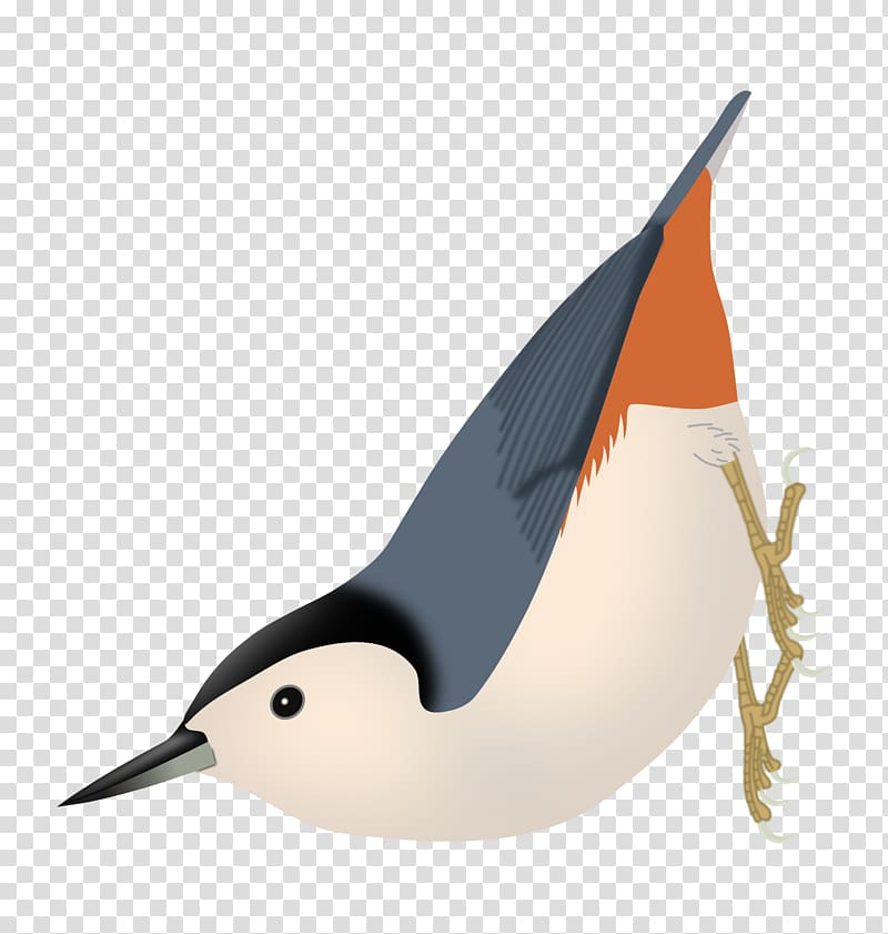 Nuthatch clipart jpg black and white download Duck Bird Passerine Eurasian nuthatch White-breasted ... jpg black and white download