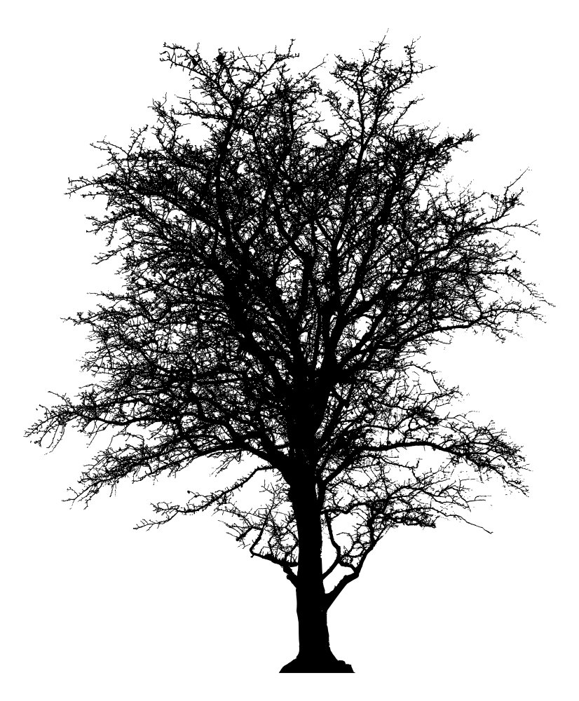 Oak tree clipart silhouette clip library OnlineLabels Clip Art - Leafless Barren Tree Silhouette clip library