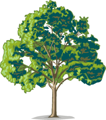 Oak trees clipart svg royalty free library Oak trees clipart free clipart images image - Clipartix svg royalty free library