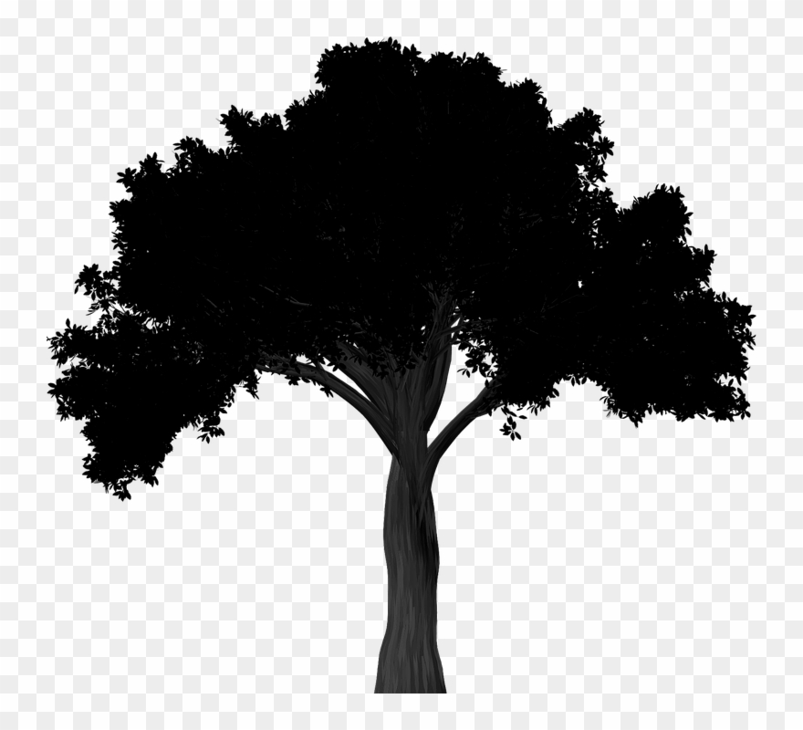 Oak trees clipart vector black and white Oak Tree Silhouette Png Clipart (#2829917) - PinClipart vector black and white